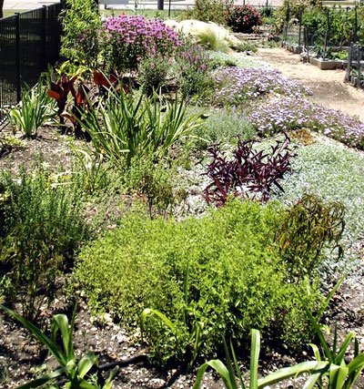 raingarden in Dallas